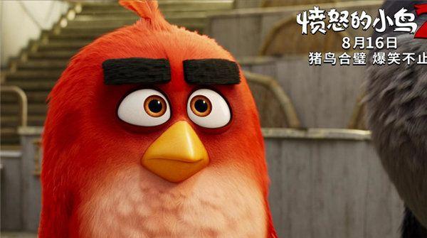 """《愤怒的小鸟2》曝""""同心协力""""版电视预告 816猪鸟""""合体""""欢乐尬舞"""