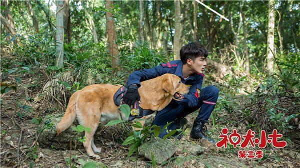 《神犬小七3》步枪围剿行动壮烈牺牲 救援队陷入哀痛